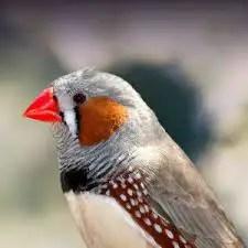 चार्ल्स डार्विन ने किस पक्षी को देख कर इवोल्यूशन का सिद्धांत दिया
