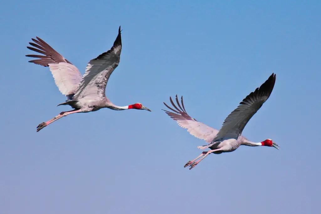 1200 प्रकार के पक्षी देखे जा सकते हैं भारत के पक्षी अभ्यारण्यों में