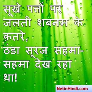 hindi Shabnam status, status in hindi for Shabnam सूखे पत्तों पर जलती शबनम के क़तरे,  ठंडा सूरज सहमा-सहमा देख रहा था!
