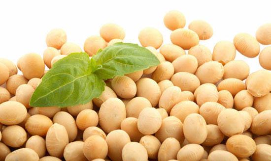 Resultado de imagen para soja semillas
