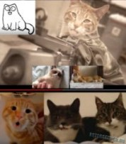 Самые популярные коты на Youtube - logo