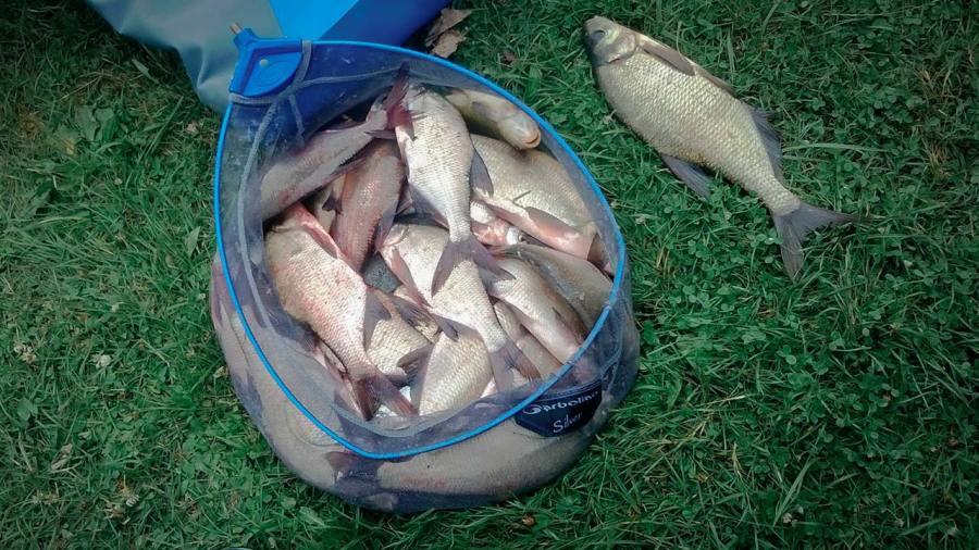 le method feeder est une variante de la pêche au feeder qui ne cible pas que des carpes. Ici une belle bourrriche des brèmes