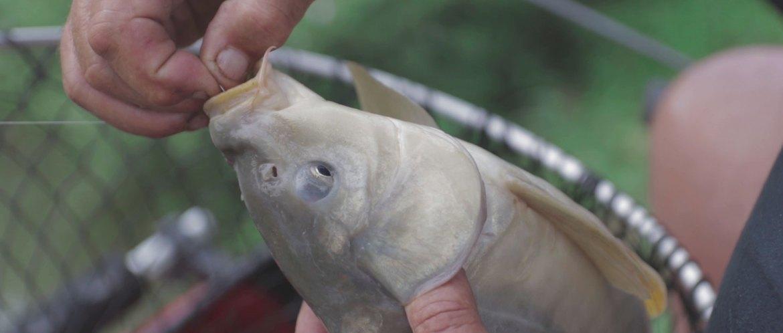 carpodrome pêche carpe au coup video netpeche magazine la carpe a mordu à l'hameçon