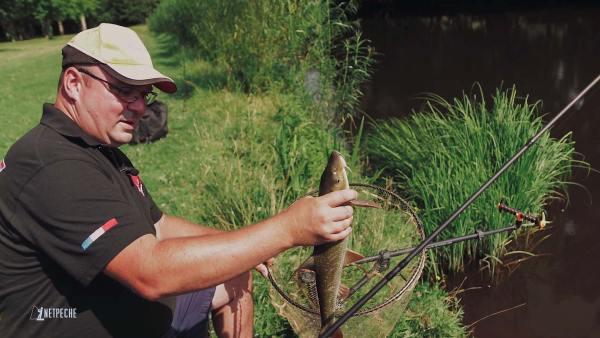 pêche barbeau method feeder riviere sauvage un joli poisson
