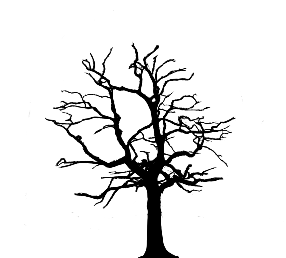 silhouette of a tree which has been thinned