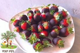קינוח ביס של תותים ושוקולד פרא