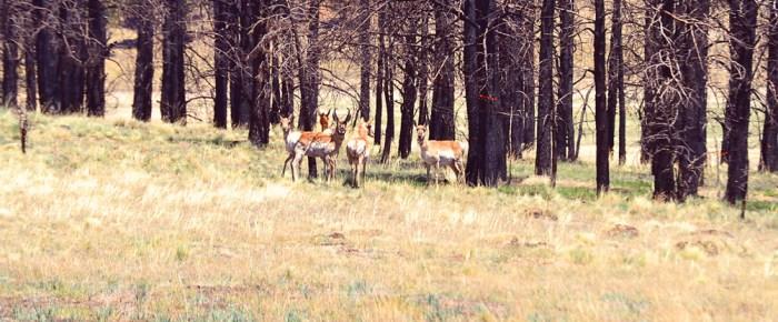 May Ranch Retreat – Where the Antelope Play!