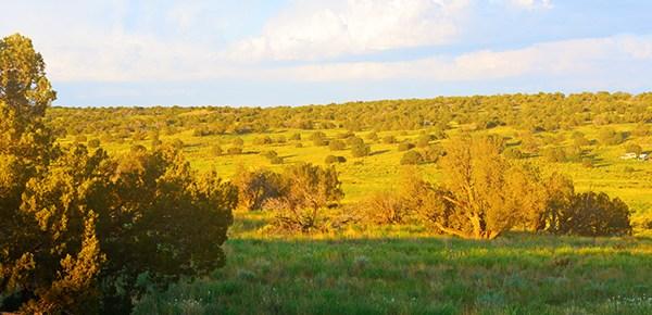 Ranch Revue: Green Morning