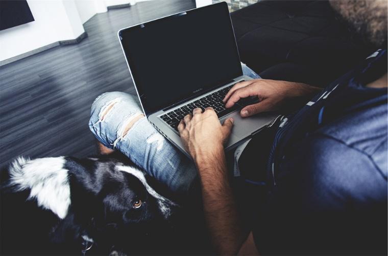 La nueva tendencia: Llevar a tu mascota al trabajo y los beneficios que conlleva