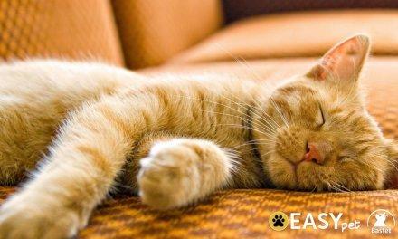 Easy relanza su servicio de transporte de mascotas Easy Pet con una acción solidaria