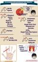 infografia-herramientas-online-gratuitas
