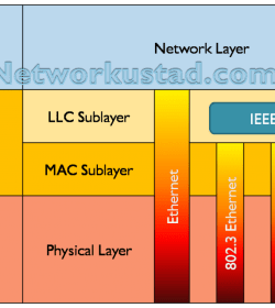MAC and LLC