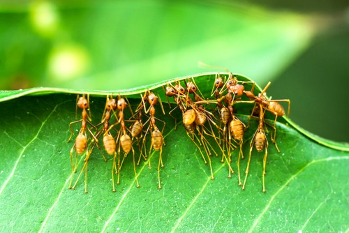 ants working as community