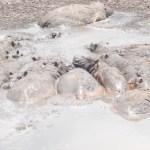 """Schreckliche Dürre in Kenia- """"Wenn es nicht regnet, wird keiner von uns überleben""""- auch die große Wanderung der Gnu-Herden ist betroffen - Drought crisis- Buffaloes and hippos die in Kenya due to drought and Kenya's iconic wildebeest migration suffers"""