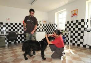 Tierarztraum