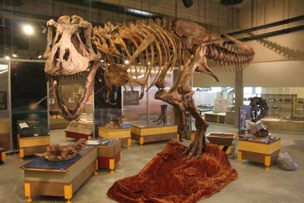 Dinosaurierskelett in einem halbfertigen Museum