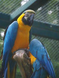 Foto mit wildfarbenen Tieren als Vergleich