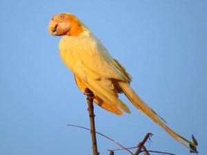 ein goldgelber Ara sitzt auf der Spitze eines Astes