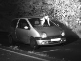 Taube verdeckt Autofahrer bei Radarkontrolle