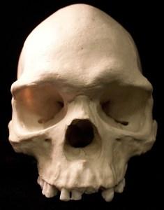 Schädel vor schwarzem Hintergrund