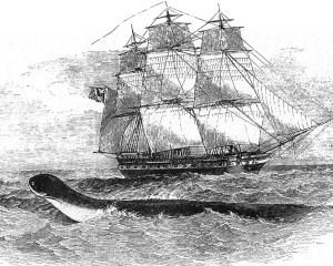 Tuschezeichnung einer Seeschlange im Vordergrund und eines alten Segelschiffes im Hintergrund