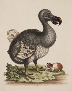 Kolorierte Zeichnung eines Dodos und eines Meerschweinchens