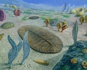 Künstlerische Darstellung eines Biotops mit Ediacara-Lebewesen