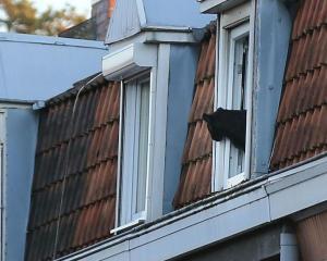 Der Panther von Armentières blickt aus dem Fenster