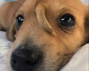 Narwhale, der Hund mit dem Schwanz auf der Stirn
