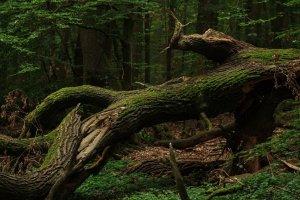 Zerbrochener Baum im Wald