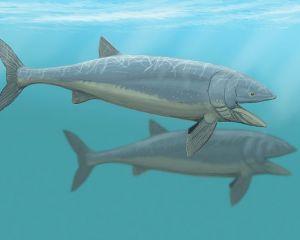 Rekonstruktion zweier Leedsichthys