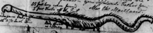 Zeitgenössische Darstellung der Seeschlange von Stronsay