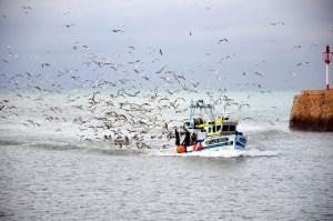 Möwen und Fischerboot