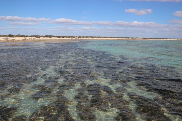 Shark Bay mit Stromatolithen