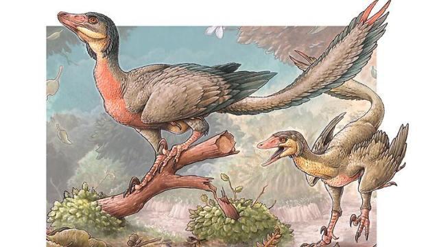 So könnte der Overoraptor chimentoi ausgesehen haben. (Foto: Consejo Nacional de Investigaciones Científicas y Técnicas)