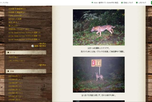 Website mit den fraglichen Fotos des Honshu-Wolfes