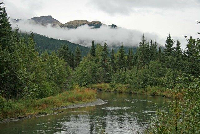 Borealer Wald und Fluß