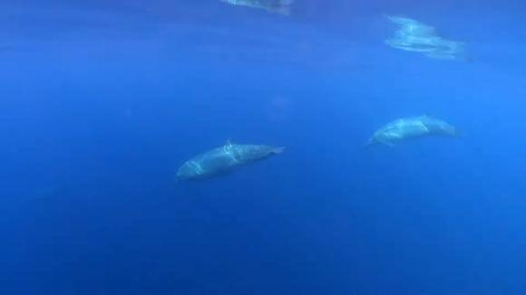 Neuer Schnabelwal?
