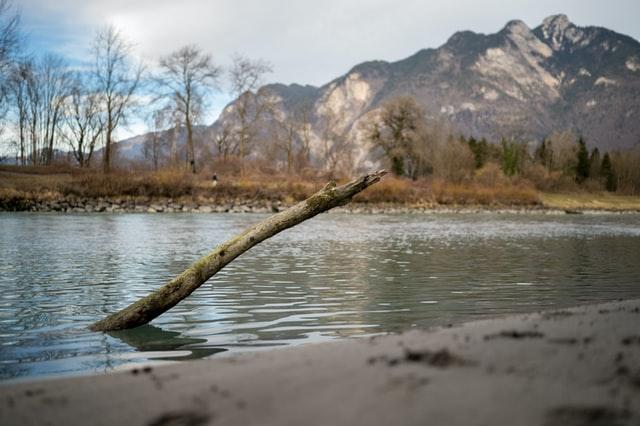 Ast im Fluss Rhone