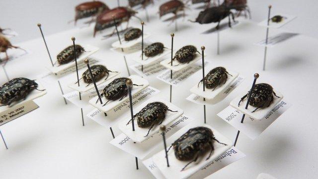 Wissenschaftliche Käfersammlung