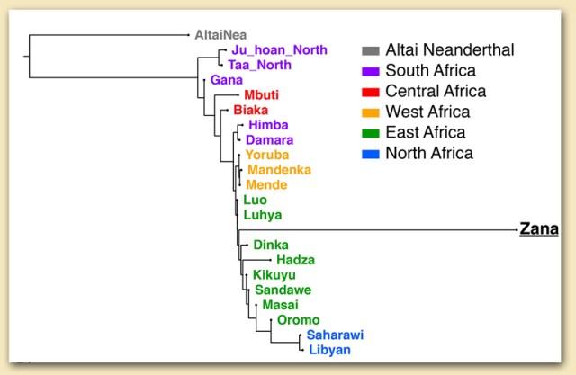 Phylogenetischer Stammbaum