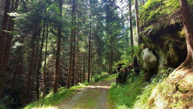 Wald in Böhmen