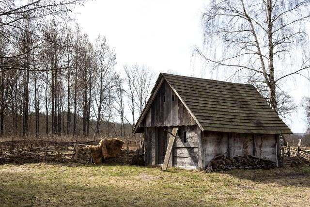 Wikingerdorf, lebte der Krieger so?