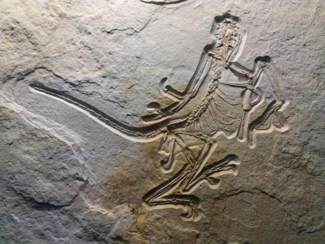 Das 12. Archaeopteryx-Exemplar
