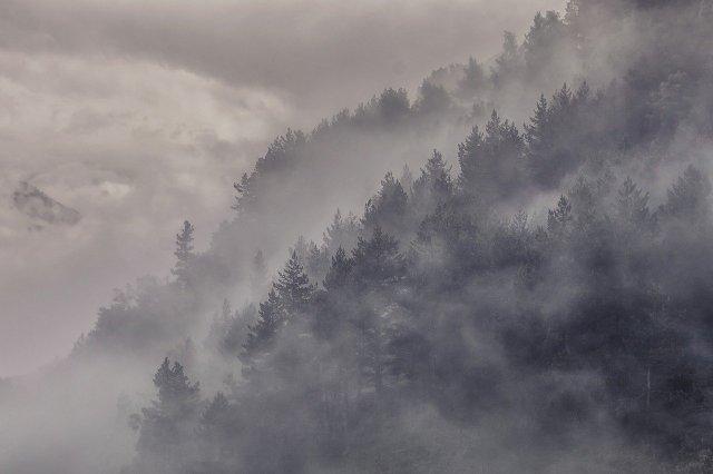 Nebelwald der Wildmenschen?