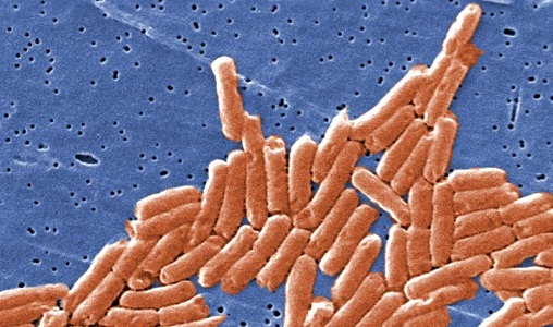 Scientists Figure Out Salmonella Bacteria Infect Plants