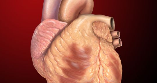 Israeli Scientists Print 3D-Heart With Human Tissue