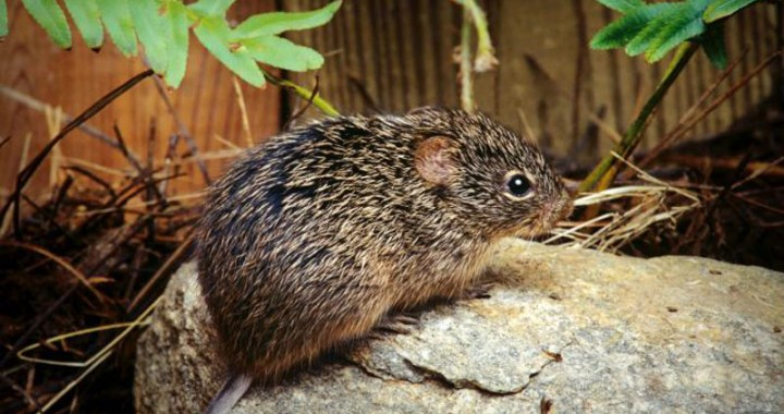 Hantavirus Claims a Life in China – Don't spread Panic