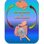 The Gut-Brain Crosstalk