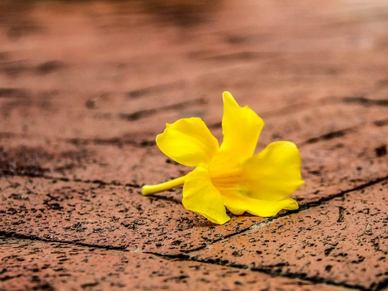 Katalonien und die gelbe Flut